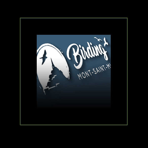 Réalisation Plaquette Birding MSM par Iconicité Studio Graphique Normandie